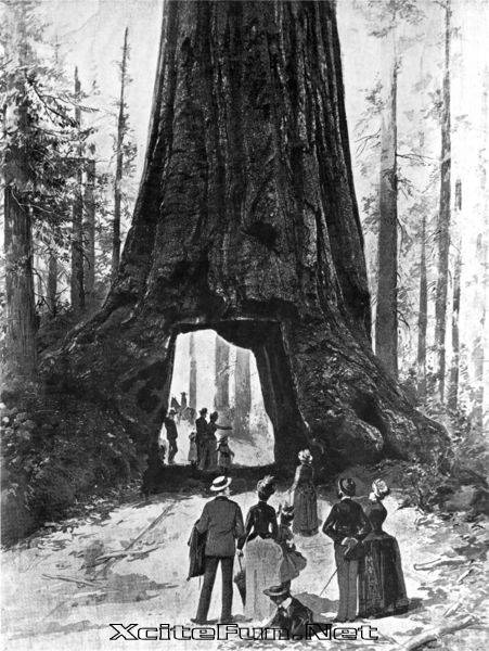 118588,xcitefun-wawona-tunnel-tree-1