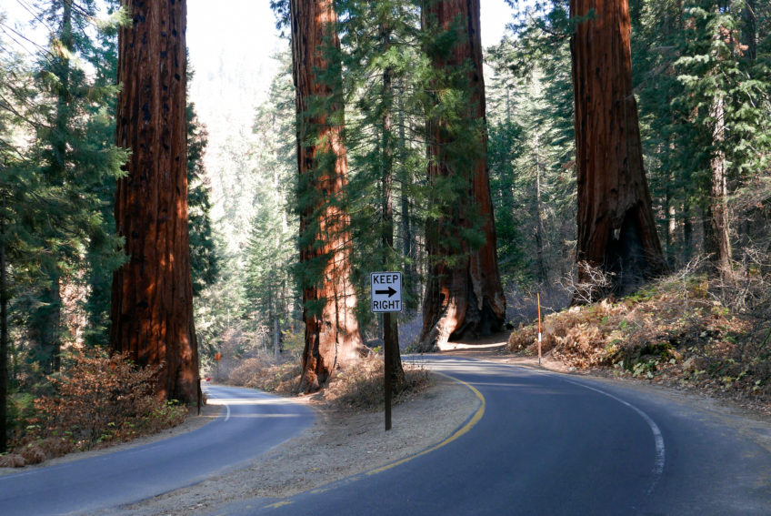Národné parky USA – Úvod a Sequoia National Park