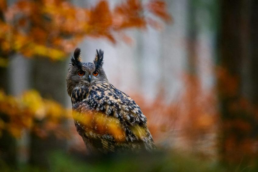 Aranžované fotenie vtákov