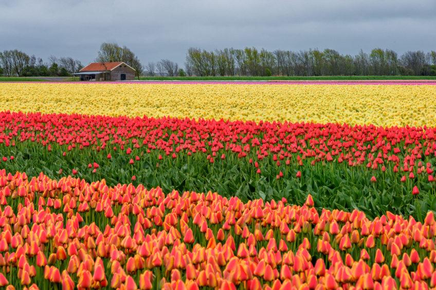 Holandsko, 1.časť