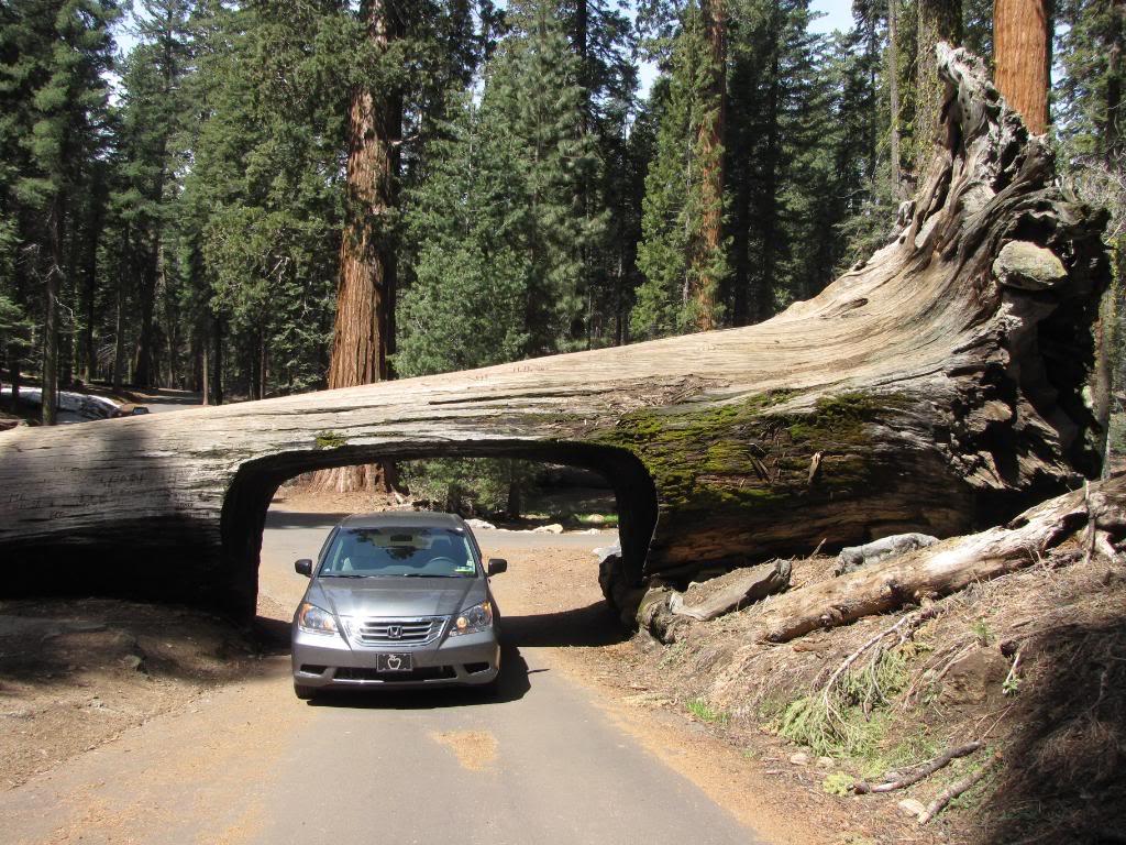 Sequoia028-1